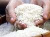 Giá lúa gạo hôm nay 15/10: Một số loại gạo tăng mạnh