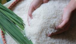 Giá lúa gạo hôm nay 14/10: Lúa tụt giảm, nông dân khóc ròng