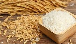 Giá lúa gạo hôm nay 16/10: Lúa gạo biến động trái chiều