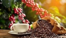Giá cà phê hôm nay 12/10: Thị trường nội địa quay đầu giảm