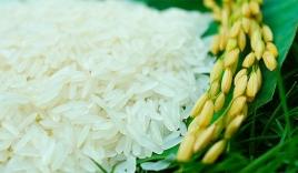 Giá lúa gạo hôm nay 30/9: Biến động trái chiều trong phiên cuối tháng