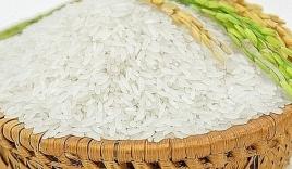 Giá lúa gạo hôm nay 22/10: Giữ đà ổn định