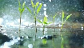 Bản tin thời tiết 10 ngày (13-23/9): Mưa dông dài rác, cục bộ có mưa vừa mưa to