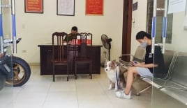 Bất chấp chỉ thị 16, cô gái HN vẫn dắt chó đi dạo và bị phạt 2 triệu đồng