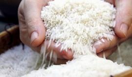 Giá lúa gạo hôm nay 28/9: Giá lúa giảm nhẹ