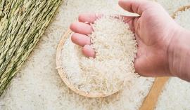 Giá lúa gạo hôm nay 21/10: Đồng loạt tăng mạnh