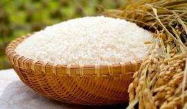 Giá lúa gạo hôm nay 27/10: Đi ngang sau phiên cầm chừng