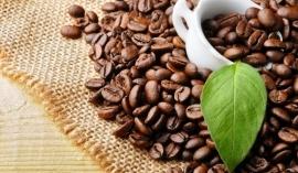 Giá cà phê hôm nay 20/9: Giá cà phê nội địa vẫn ở mức cao