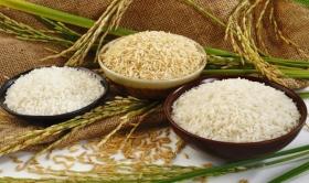 Giá lúa gạo hôm nay 24/9: Biến động nhẹ