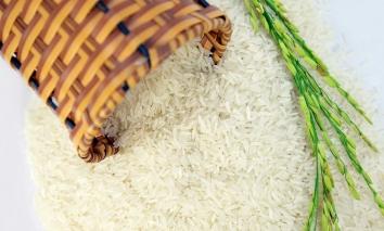 Giá lúa gạo hôm nay 5/9: Đi ngang chờ thời đột phá