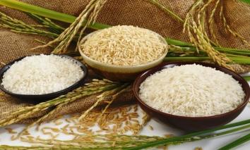 Giá lúa gạo hôm nay 9/9: Đồng loạt tăng, thị trường sôi động trở lại