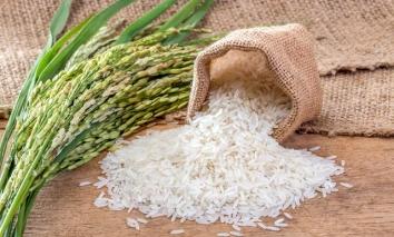 Giá lúa gạo hôm nay 14/9: Tăng đột biến