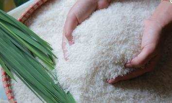Giá lúa gạo hôm nay 15/9: Giá gạo sụt giảm nhẹ