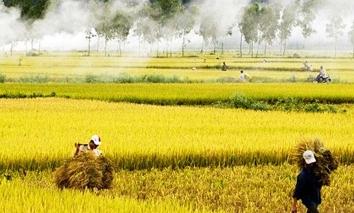 Giá lúa gạo hôm nay 16/9: Biến động nhẹ sau phiên bình ổn