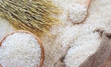 Giá lúa gạo hôm nay 18/10: Lúa gạo đồng loạt đi ngang