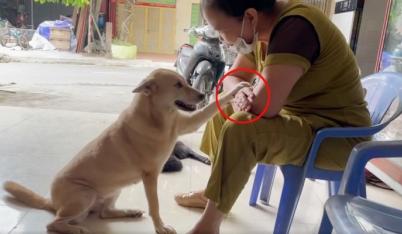 Chú cún khiến CĐM 'đắm đuối' vì nhõng nhẽo hơn cả người yêu