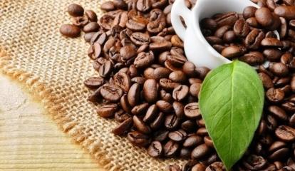 Giá cà phê hôm nay 28/9: Đồng loạt giảm trên mọi thị trường