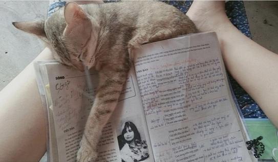 Thi tốt nghiệp THPT Quốc gia 2021: Tờ lịch và chú mèo 'tiên tri' trúng tủ bài 'Sóng' khiến netizen bội phục
