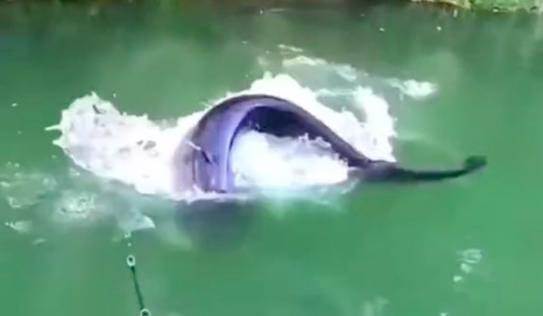 Anh chàng đi câu được con cá khiến Bà Tân vlog có lẽ cũng không dám xử lý