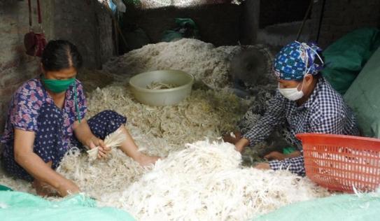 Trung Quốc bỏ 460 tỷ đồng để nhập khẩu hơn 4000 tấn lông gà lông vịt từ Việt Nam