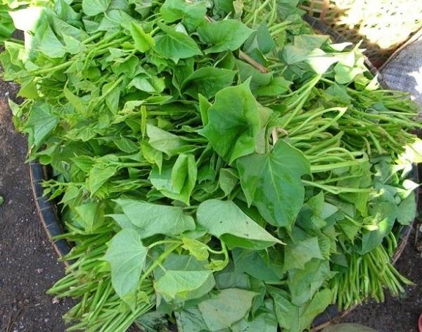 Loại rau mọc ở vườn, bán rẻ như cho được ví là 'kẻ thù của ung thư' 1