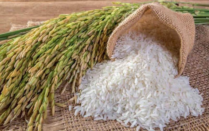 Giá lúa gạo hôm nay 13/8: Lúa tiếp tục tăng, gạo bình ổn 1