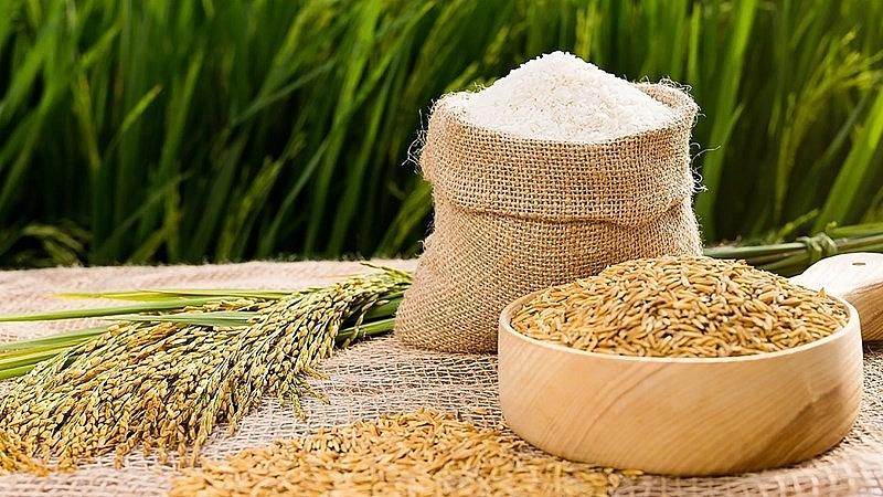 Bản tin giá lúa gạo hôm nay 31/8: Bất ngờ chững lại 1