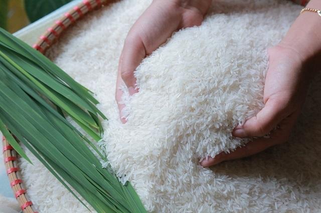 Giá lúa gạo hôm nay 15/9: Giá gạo sụt giảm nhẹ 1