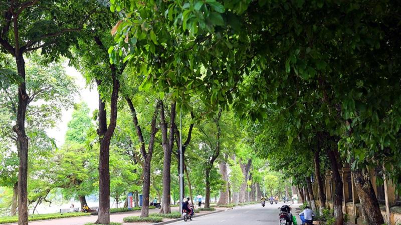 Dự báo thời tiết 1/8: Hà Nội có mưa rào và dông, Trung Bộ nắng nóng 1