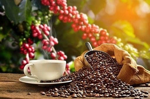 Giá cà phê hôm nay 24/9: Thị trường cà phê quốc tế đồng loạt tăng 1